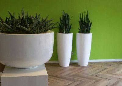 groene muur met witte potten