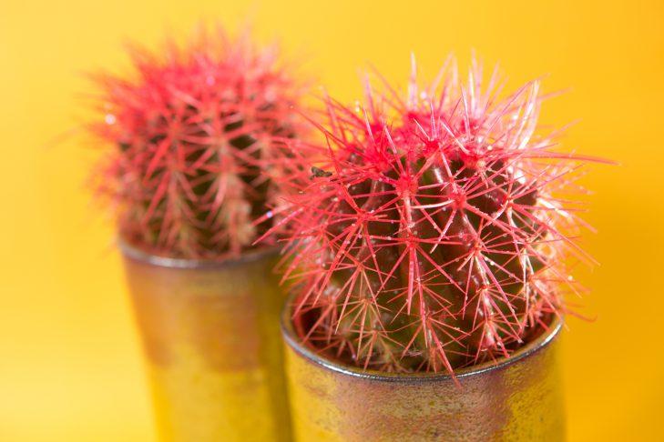 Verzorging cactus